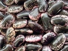 Large Black Speckled Kidney Beans