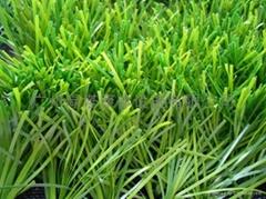 足球場人造草坪