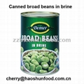 Canned broad beans in brine salty from