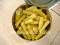 Canned green Beans cut in brine made by fresh material 4
