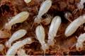 除蟑螂白蚁 3