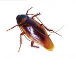 除蟑螂白蚁 1