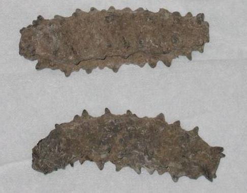 DRIED BADONOTUS SEA CUCUMBER