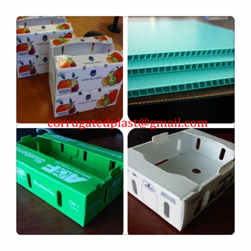 ... Corrugated Plastic Boxes For Vegetables And Fruits 4