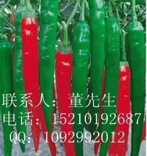 辛鶴1號-辣椒種子