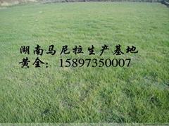 郴州市甦仙區硚口白溪草皮苗木綠化專業合作社