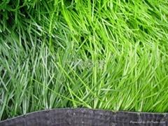 挤平单丝人工草坪