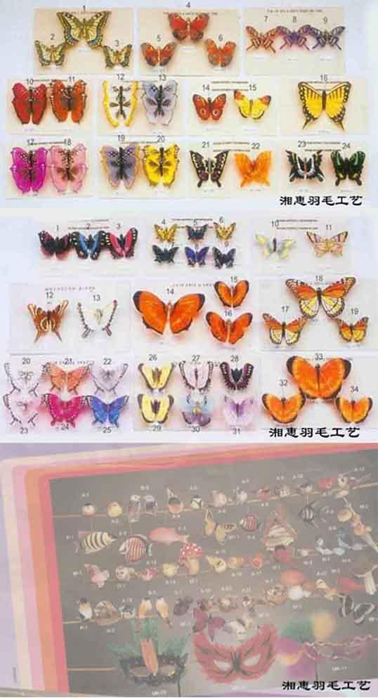 蝴蝶小鳥 1