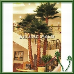 preserved indoor palm tree