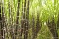 Floor type sugarcane extractor(ESJ-300C) 2