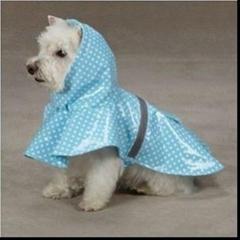 Blue & White Polka Dot Waterproof Hooded