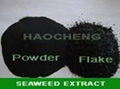seaweed extract for organic fertilizer 1