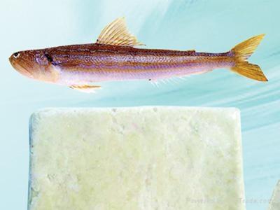 Fronzen Synodontidae fish surimi 1
