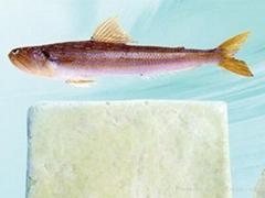 Fronzen Synodontidae fish surimi