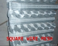 square wire mesh(manufacturer)