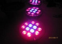 12w Par Led Grow Lights For Vegetables