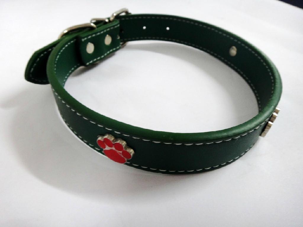 绿色时尚宠物项圈 1