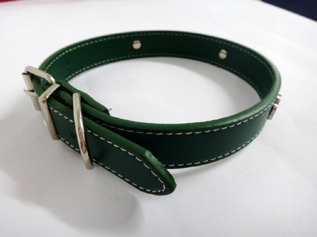 绿色时尚宠物项圈 2