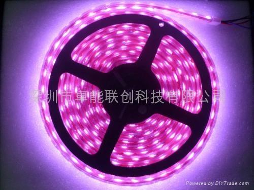 供應LED照明裝飾廠家直銷3528.5050燈條 3