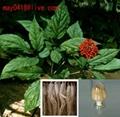Panax Ginseng Extract
