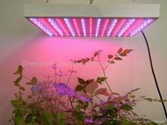 new 80W super decoration plant grow light, horticultural light