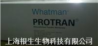 Whatman转印硝酸纤维素膜Western专用