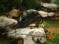 铜雕豹子 1