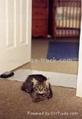 驱狗驱猫垫