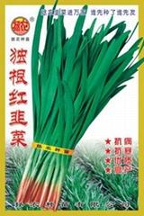 独根红韭菜