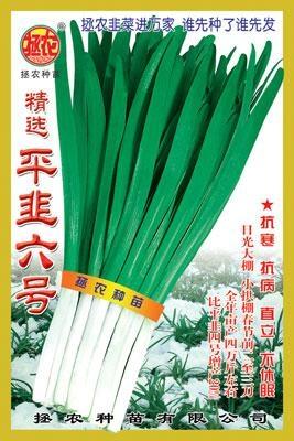 韭菜种子——平韭六号 1
