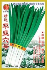韭菜种子——平韭六号