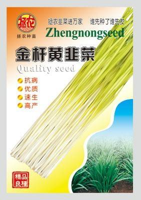 金杆黄韭菜 1