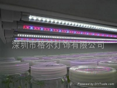 led T8 tube grow light for the supermarket