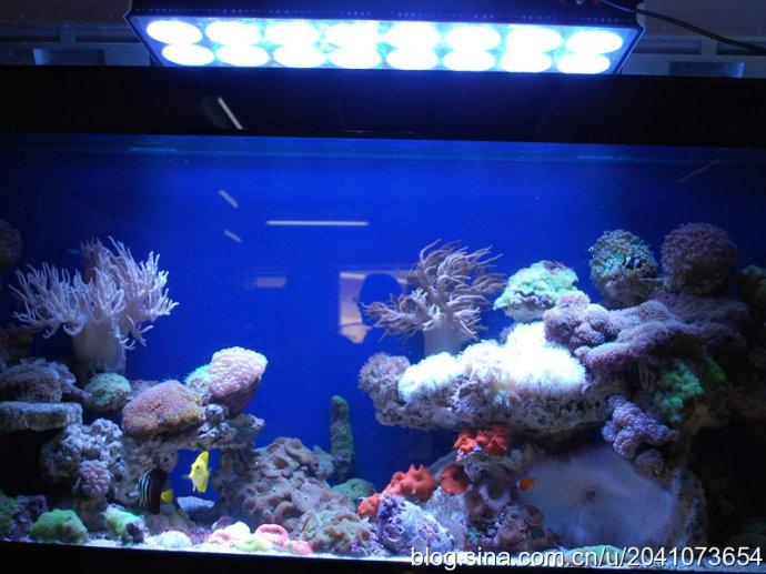 120W led 鱼缸照明灯 3