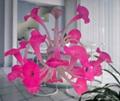 佺球現代藝朮玻璃粉紅色家居吊燈