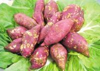 脱毒红薯良种