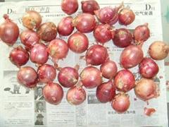 Red Onion Yellow onion