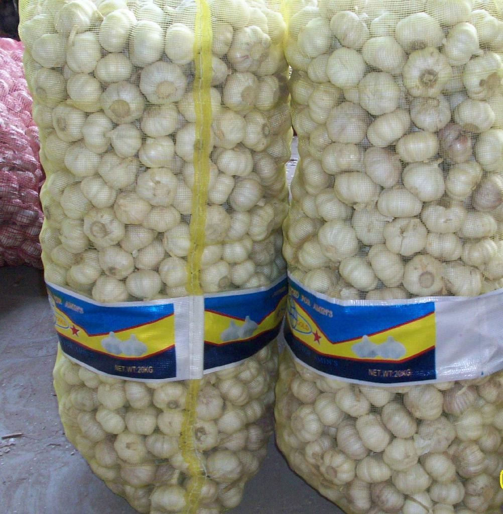 chinese fresh garlic crop 2012 2