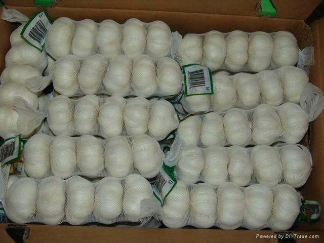 chinese fresh garlic crop 2012 5