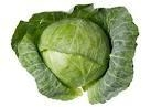 Cabbage 1