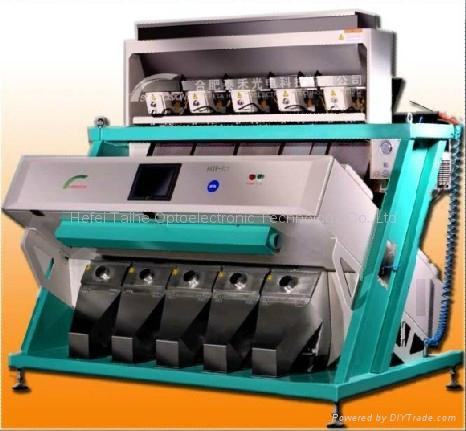 CCD CHINA WOLFBERRY COLORSORT 4