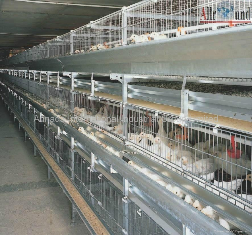 Chicken Farming Equipment Ar C China Poultry