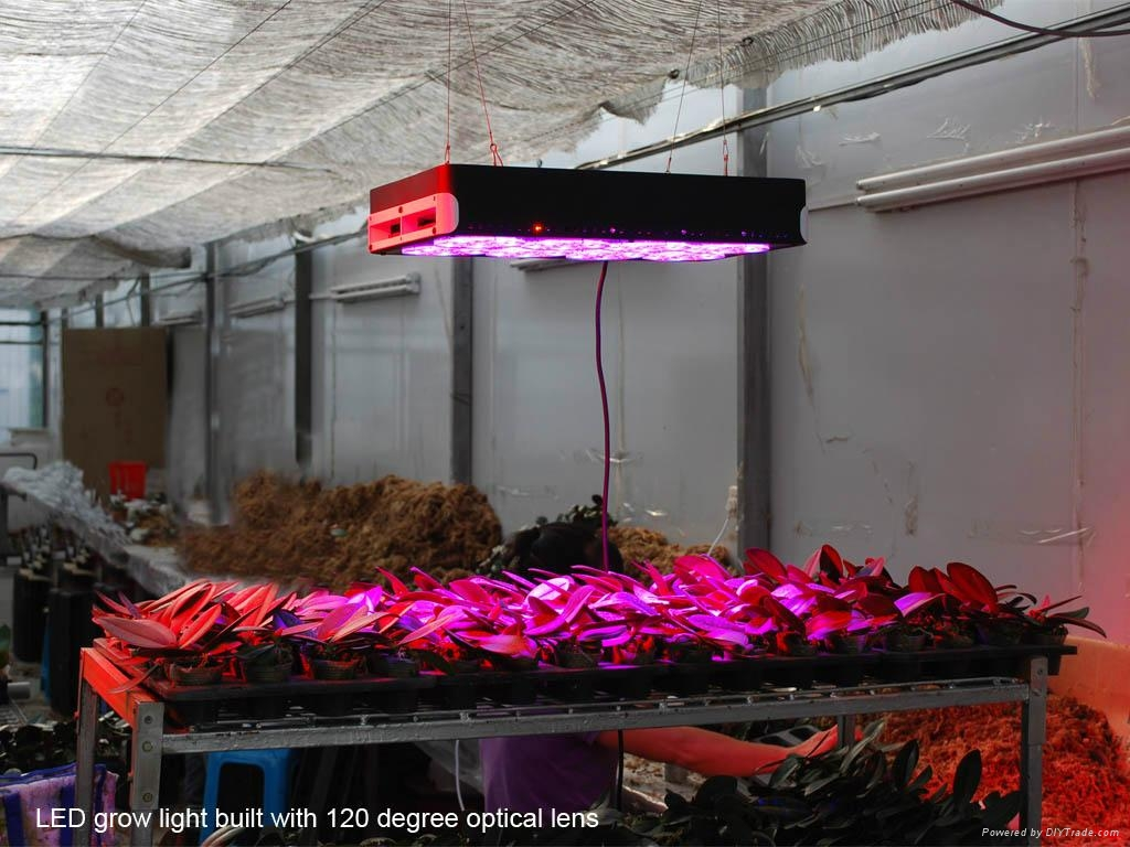 720W led grow light for greenhouse 3