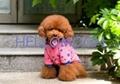pet products(Dot knitting)