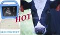 VET Laptop Ultrasound Scanner for Animal