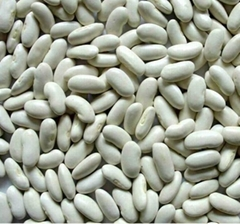 White Kidney Beans Long Shape