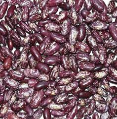Purple Speckled Kidney Beaqns