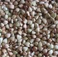 Buckwheat Kernel Raw 1