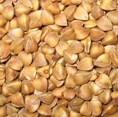 Roasted  Buckwheat  Kernel