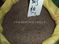 扁柏種子側柏種子 1
